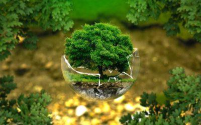 Communication écoresponsable : le Top 10 des objets publicitaires écologiques